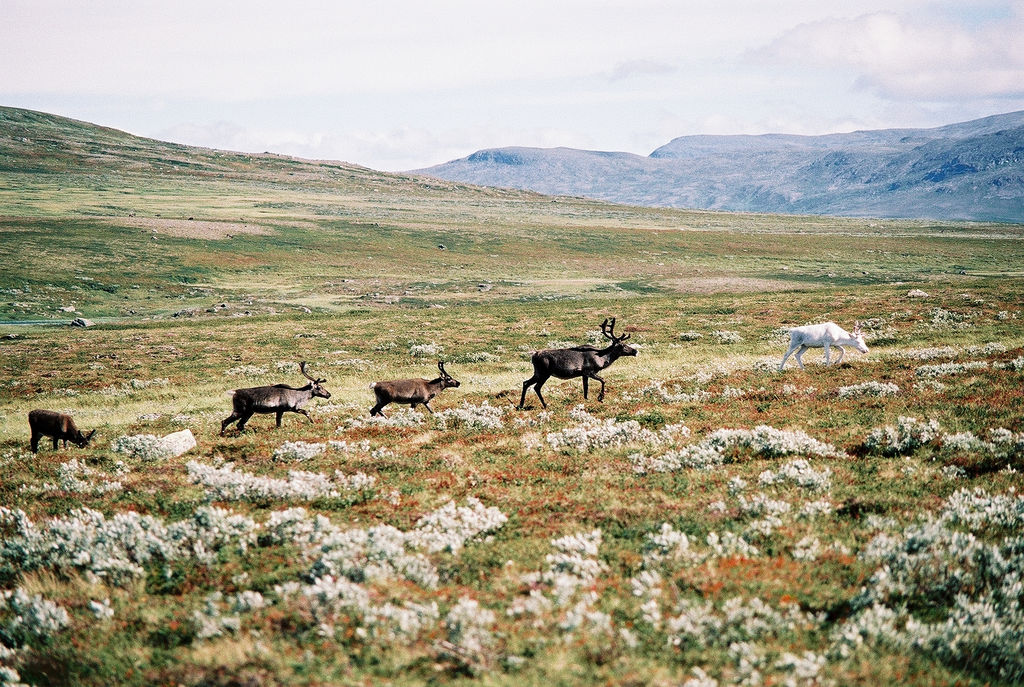 Migratory animals carry more parasites, says study