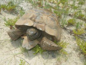 Giving tortoises a 'head start'