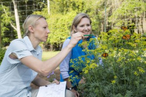 Gardening practices can be tailored for pollinators