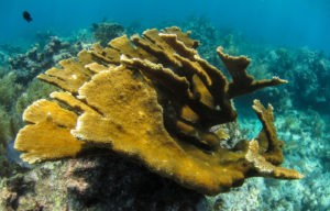 Long-term Data Reveals Pollution's Toll on Coral Reefs