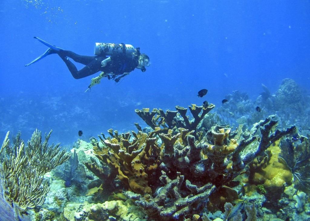 Diver swimming over Elkhorn Coral in the Florida Keys
