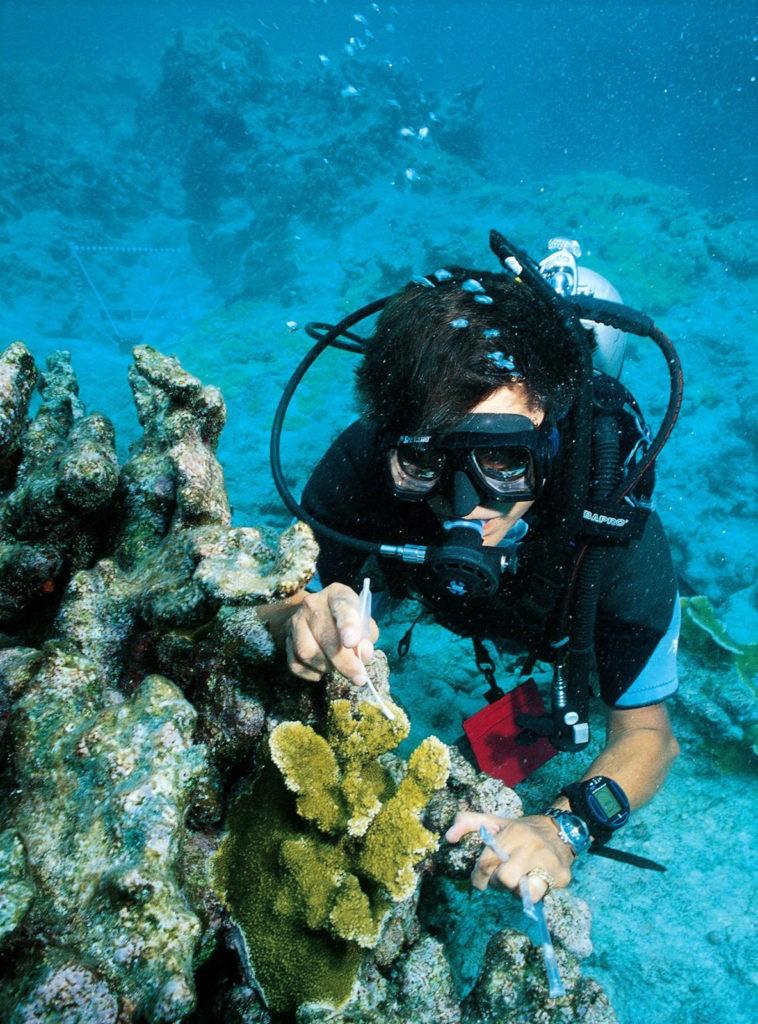 Sampling coral disease off Key West, Florida.