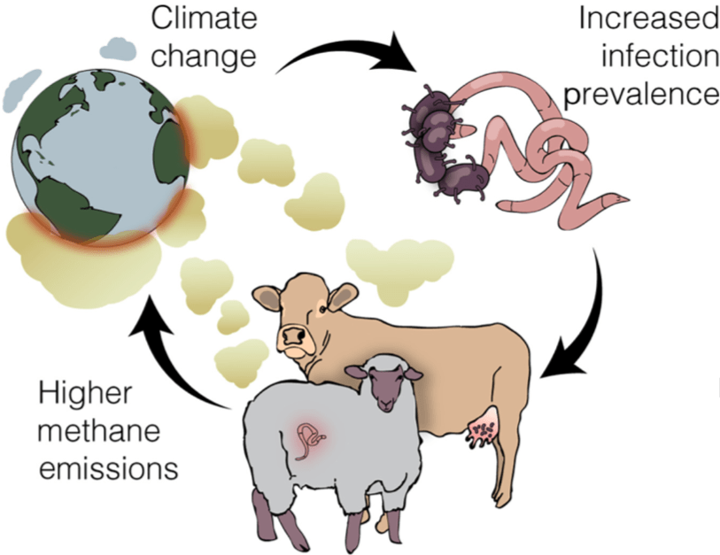 Illustration showing feedback loop with climate change leading to increased infection prevalence leading to higher methane emissions leading to climate change. (Image courtesy of Trends in Ecology & Evolution)
