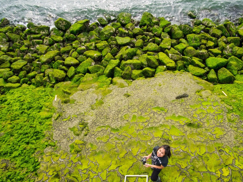A woman stands amid green algae and rocks. Photo: Network for Engineering with Nature.