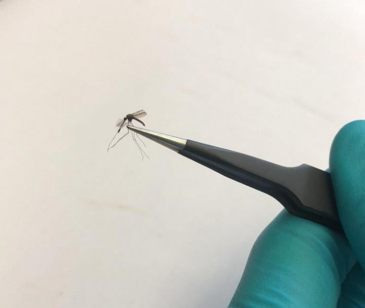 University of South Florida researchers sample mosquito for West Nile virus. Courtesy University of South Florida.