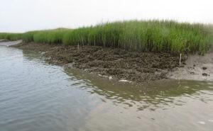Ecosystem Engineers: Byers studies how marine organisms structure habitat