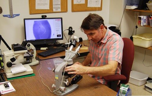 adjusts a slide prepared with an ant on it to be able to examine its pulse. Photo: Amanda Budd.