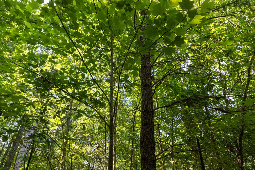 Whitehall Forest in Athens, Georgia. Photo: Ben Taylor.