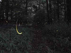 Using community science to illuminate firefly habitats in metro Atlanta