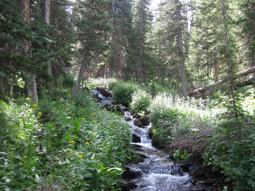A mountain stream in Colorado that was part of the study by Whitney Beck, Amanda Rugenski, and LeRoy Poff. Photo: Amanda Rugenski.